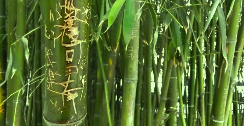 coaching_bambu